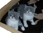 kittens2 copy.jpg (19978 bytes)